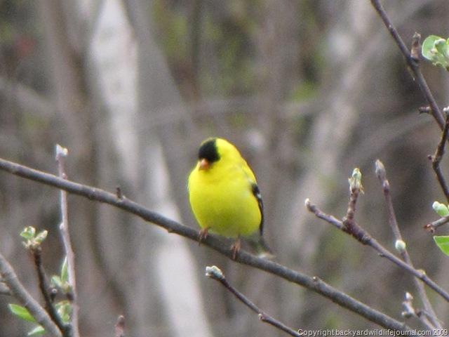 Birdwatching and Bird Photos