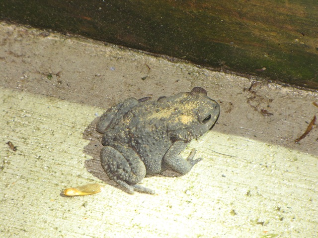 One night, Two Toads