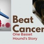 Beat Cancer one basset hound's story