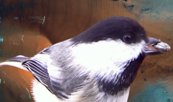 Chickadee digital artwork