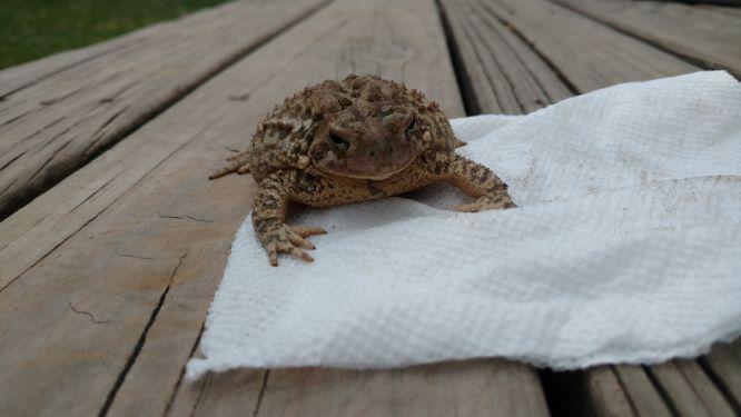Toad Pics