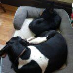 Tilda and Fritz sleeping together