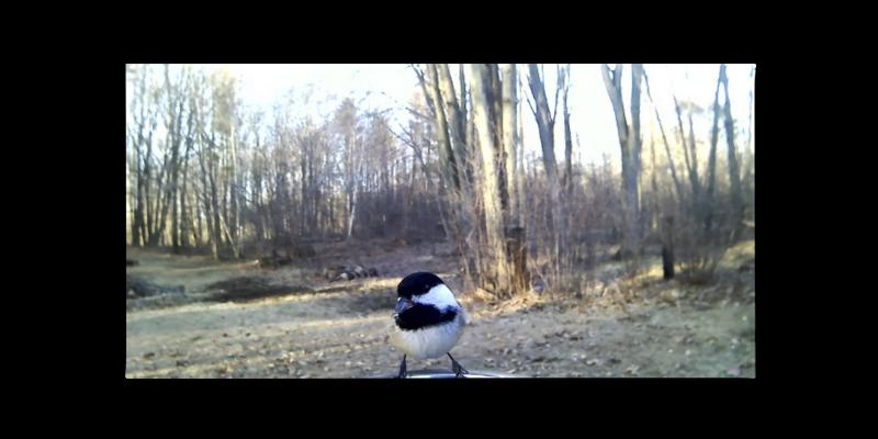 Tilda Barking Audio Capture