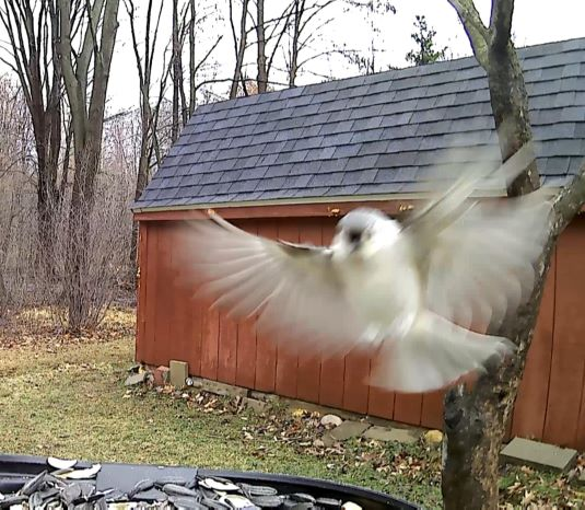 Most exciting 30 seconds of Feeder Action!